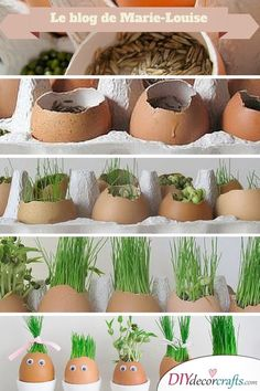 Herb Planters - Ideas for Eggs