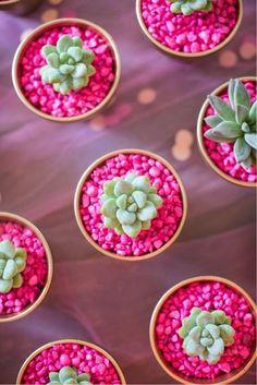 Incremente a decoração do vaso com pedrinhas coloridas que combinem com a cor da suculenta