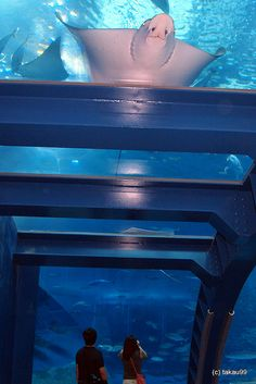 Okinawa Churaumi Aquarium - Japan.  Deeper ocean and royal blues, with aqua and pale grey.