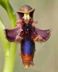 Orquídea exótica, mariposa linda
