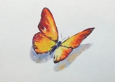 "Butterfly, insect, yellow, orange, nature art. Butterfly 1-original watercolor painting (5"" x 7"")"