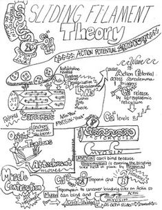 Pin by Tracy KirkBriscoe on respiratory system Anatomy