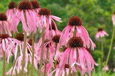 Pollinator-Friendly Plants.