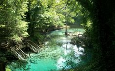 Blue Springs State Park in Orange City, Florida