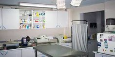 clinica veterinaria - Buscar con Google