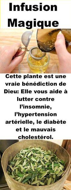 Cette plante est une vraie bénédiction de Dieu: Elle vous aide à lutter contre l'insomnie, l'hypertension artérielle, le diabète et le mauvais cholestérol.