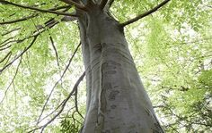 Arborist Report Melbourne