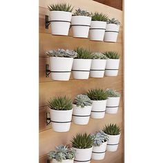 I really love the clean look of this vertical planter. Plant succulents for a chic wall garden, or, plant spices in your kitchen and eat fresh all year long! Vertical Planter, Vertical Gardens, Succulent Wall Planter, Vertical Garden Wall, Wall Herb Garden Indoor, Diy Wall Planter, Succulent Care, Backyard Planters, Backyard Landscaping