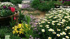庭の中に地植えだけでなく花壇を入れることによって、無造作に見えず良いアクセントになります。
