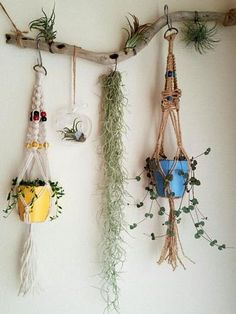 Indoor Gardens For Your Home Tree Branch Crafts, Branch Decor, Indoor Flowers, Indoor Plants, Diy Hanging Planter, Air Plant Display, Deco Nature, Inside Plants, Macrame Plant Hangers