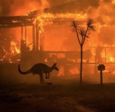 Apocalyptic Scenes in Australia as Fires Turn Skies Blood Red A kangaroo rushes past a burning house in Lake Conjola, New South Wales, Australia, on Tuesday.Matthew Abbott for The New York Times décembre 2019 January 2020 . Australia Map, Sydney Australia, Australia Country, Australia Hotels, Ugg Australia, Sharon Stone, Nicole Kidman, Great Barrier Reef Australia, Bushfires In Australia