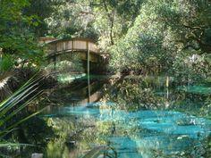 https://flic.kr/p/7hrVyf | Fern Hammock Pool Bridge | The maple leaves have not begun to change colors in mid November at Fern Hammock.