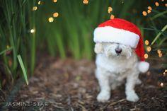 Merry Christmas - Jasmine Star Blog