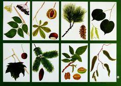 Poster in A1 mit 16 gemalten Blättern der häufigsten Bäume (Laub- und Nadelbaum) von Ahorn bis Weide +Ahorn, Apfel, Birke, Buche, Eiche, Espe, Fichte, Haselnuss, Holunder, Kastanie, Kiefer, linde,...