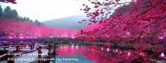 Η λίμνη με τις κερασιές στην περιοχή της Ubuyagasaki της Ιαπωνίας.