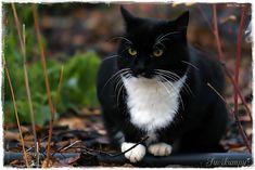 Suvikumpu: Onnin päivästä kevättä kohti Cats, Animals, Gatos, Animales, Animaux, Animal, Cat, Animais, Kitty