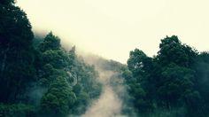 туман, кроны, гора, деревья, горы, лес 1366x768