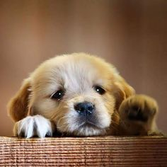 Pictures of puppies wallpaper best hd wallpapers wallpaperscute best hd wallpapers of animals desktop backgrounds for pc mac laptop tablet mobile phone voltagebd Choice Image
