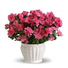 Buy decorative and fresh plants to be placed in your garden, living or any other area of your home in Greenville NC and surrounding areas.