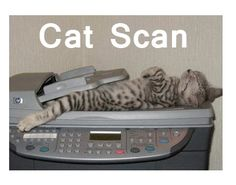 now that's a cat scan!