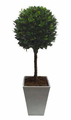 the bay tree solution kündigen