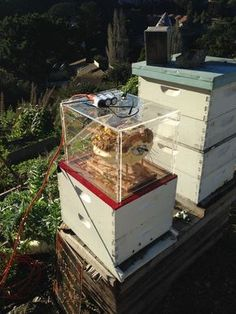 Bee observation hive captures time-lapse video of hive activity.