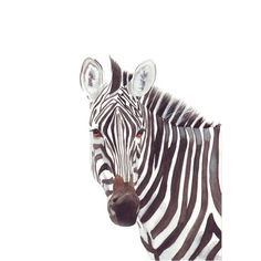 Zebra Original watercolour painting by LouiseDeMasi on Etsy