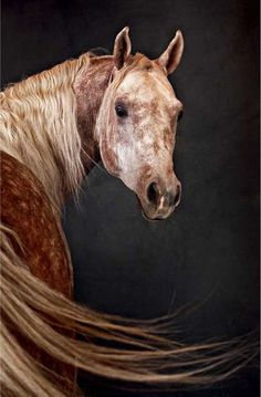 thepaintedbench: Red Roan Horse