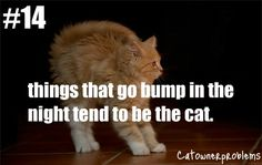 ... about Cat Owner Problems on Pinterest Cats humor, Cats and Memes