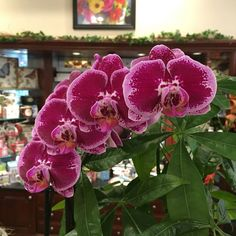 Stunning orchids here at the shop. Can't beat that!