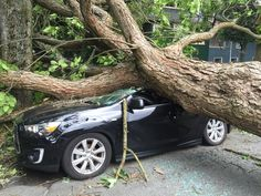 08/29/2015 - Massive Vancouver wind storm knocks out power to thousands (PHOTOS, VIDEOS)