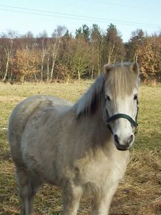 Horse at Buck Wood, Thackley #cute #fluffy #horse