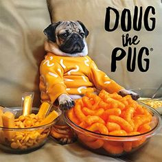"""Many pet owners ask """"Can dogs eat cheese puffs? The simple answer is YES, but I would not recommend you feed cheese puffs to your dog. Cheetos brand of cheese puffs are . Doug The Pug, Funny Dogs, Funny Animals, Cute Animals, Lollapalooza, Cosmopolitan, Nashville, Can Dogs Eat, Buffalo Games"""