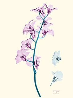 Floral X-rays - Brendan Fitzpatrick Photography