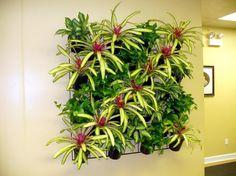 Stavba Domu |Živé rostliny jako dekorace interiéru