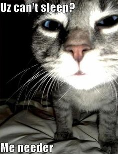 Uz can't sleep? My cat from 3 to 4 in the morning or until he gets fed.