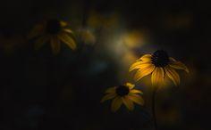 Photograph Feeling A Little Blue by Paul Barson on 500px