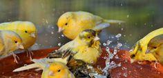 A good bath!