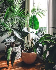 Amazing Indoor Jungle Decorations Tips and Ideas 55 House Plants Decor, Plant Decor, Green Plants, Tropical Plants, Jungle Decorations, Deco Nature, Plants Are Friends, Foliage Plants, Interior Plants