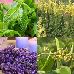 Some of the world's best medicine can be grown in your backyard. In fact, you might already have some in your herb garden. Maybe you're even using one or two of these as supplements. There's no denying the powerful remedies that are found in herbs.While we have