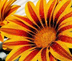 by Biljana Nikolic - Flowers Single Flower ( , mood factory, color, lighting…