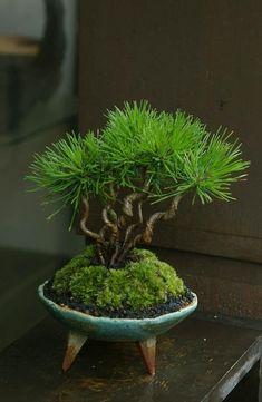 Bonsai 盆栽  low water, high style decor, with good feng shui energy