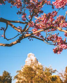 The weather is getting nice... spring is coming.  #disneygram #disneyland #disney #photooftheday #travel #instagood #instadisney #castle #disneyphotos #disneyparks #popular #instamood #picoftheday #bestoftheday #instadaily #igdaily #instagramhub #instacool  #wanderlust #travel #explore #instalike #waltdisney #dlr #explore  #matterhorn #flowers #spring by dreams_and_madness