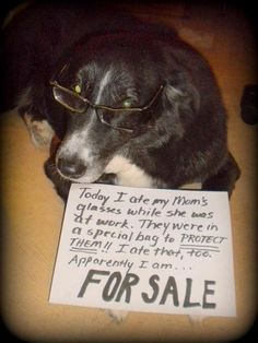 Funny Pets Pictures Dog Shaming Ideas For 2019 Funny Animal Memes, Dog Memes, Funny Animals, Cute Animals, Animal Funnies, Cat Shaming, Funny Signs, Dog Signs, Funny Cute