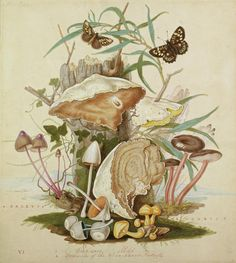 Check out this stunning work by Thomas Robins the Elder in the RHS Lindley Library; circa 1734-70 #FungiFriday