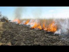 ▶ Preserving the Tallgrass Prairie - YouTube
