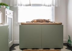 How to Conceal a Kitty Litter Box Inside a Cabinet   Interior Design Styles and Color Schemes for Home Decorating   HGTV >> http://www.hgtv.com/design/decorating/design-101/how-to-conceal-a-kitty-litter-box-inside-a-cabinet?soc=pinterest