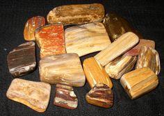 Petrified wood, tumbled
