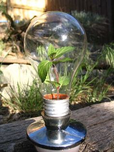Ideas for creativity – Terrarium in the bulb or bowl pictures) Terrarium Diy, Light Bulb Terrarium, Light Bulb Art, Light Bulb Crafts, Diy Luz, Recycled Light Bulbs, Heating A Greenhouse, Mini Greenhouse, Simple Greenhouse