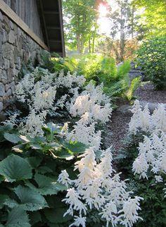 Shade Garden ...2012 shopping list must add :)